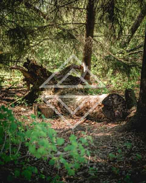 Lone Fallen Tree Stump