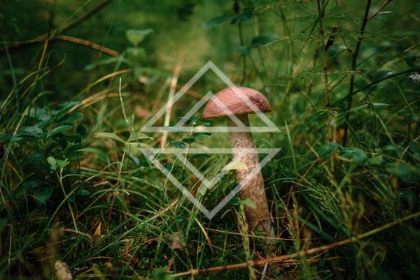 A Lone Mushroom