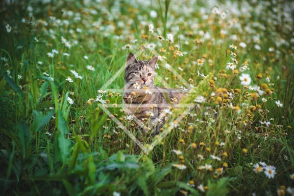 Kitten Frolicking Among Flowers