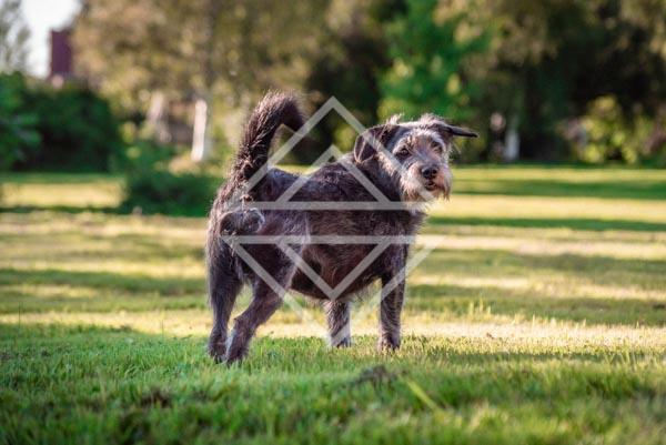 Dog Enjoying the Yard