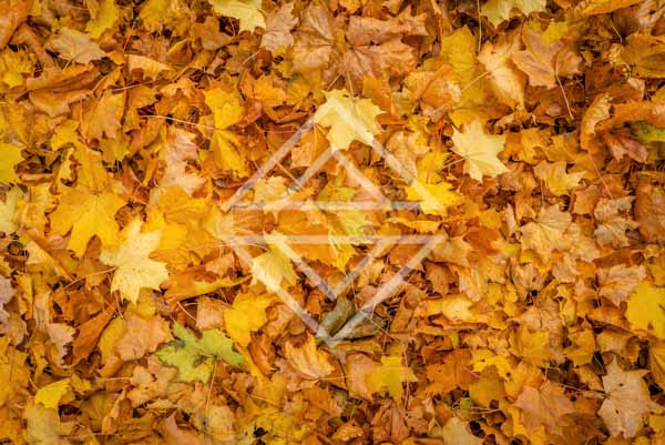 Autumn Leaves Covered Ground