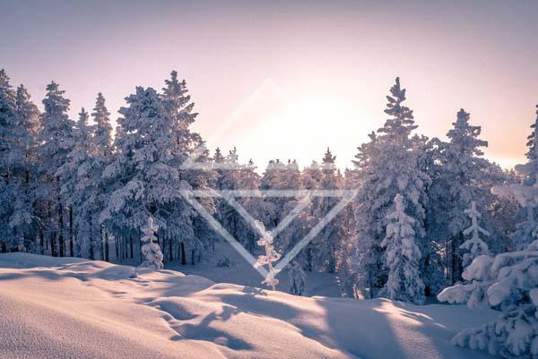 Winter Fell Sunset