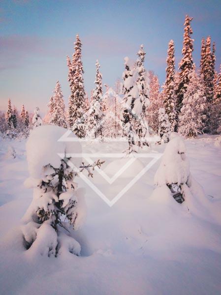 Snowclad Trees at Twilight