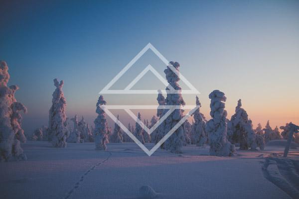Frozen Trees on a Fell