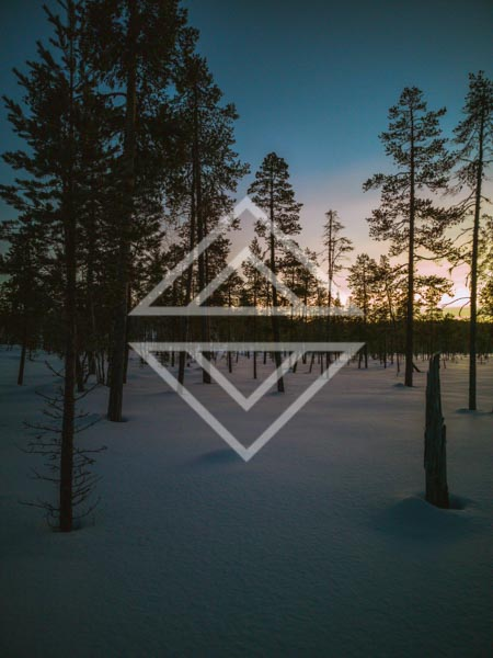 Darkening Forest
