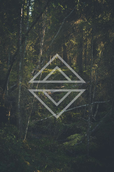Enchanting Woods 2